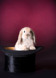 Rabbit on stage. Adorable easter rabbit in a magician's hat Royalty Free Stock Image