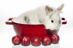 Rabbit with stewed plumes lunch Royalty Free Stock Photos