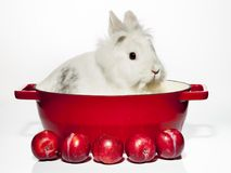 Rabbit with stewed plumes lunch Stock Photos