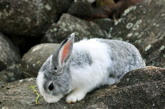 Rabbit on the stone in Thailand Royalty Free Stock Images