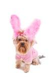 Rabbit style. Stock Photography