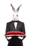 Rabbit in a suit holding a red velvet pillow Royalty Free Stock Photos