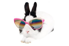 Rabbit in sunglasses. Isolated on white Royalty Free Stock Photography
