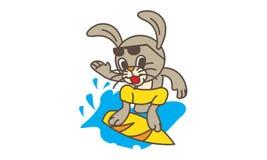 Rabbit Surfing Stock Photos