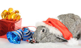 Rabbit - a symbol of 2011 Stock Photos