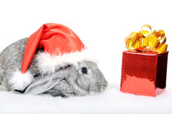 Rabbit - a symbol of 2011 Royalty Free Stock Photo