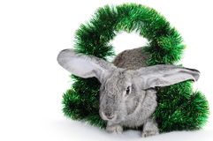 Rabbit - a symbol of 2011 Royalty Free Stock Photography