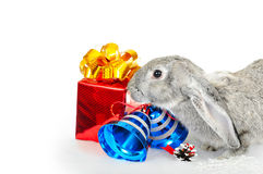 Rabbit - a symbol of 2011 Stock Images