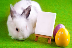 Rabbit and Table Royalty Free Stock Image