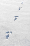Rabbit Track. A track from a rabbit in the snow Royalty Free Stock Photography