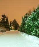 Rabbit tracks on a pristine snow Royalty Free Stock Photography
