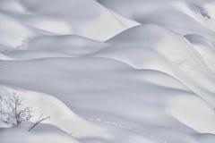 Rabbit tracks on snow Stock Image