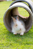 Rabbit in a tube Stock Photos