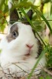 Rabbit under a bush Stock Photography