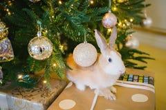 Rabbit under the Christmas tree Royalty Free Stock Image