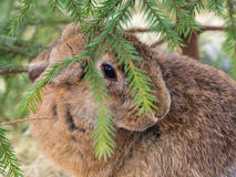 Rabbit under the tree Stock Photography
