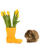 Rabbit and vase Royalty Free Stock Image