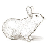 Rabbit vector drawing Royalty Free Stock Photo