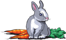 Rabbit. Vector illustration of grey bunny and carrots Stock Image