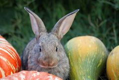 Rabbit with vegetable marrows Stock Photography