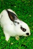 Rabbit. Walks on a green meadow stock photo