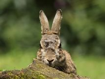 Whats up doc? Royalty Free Stock Image