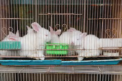 The rabbit was shut in a cage Royalty Free Stock Photography
