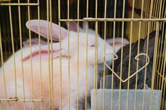 The rabbit was shut in a cage Stock Images