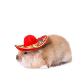 Rabbit wearing a colorful mexican sombrero. On white Stock Images