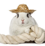Rabbit wearing a hat and leaning on a rope Royalty Free Stock Photos