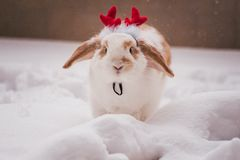 Rabbit wearing red deer horns costume Royalty Free Stock Images