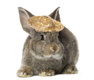 Rabbit wearing a straw hat Royalty Free Stock Photography