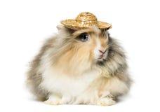 Rabbit wearing a straw hat Stock Image