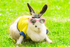 Rabbit wearing Sunglasses in the park Royalty Free Stock Photos