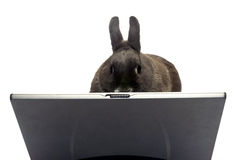 Rabbit webmaster. Rabbit to illustrate the webmaster e-commerce Royalty Free Stock Image