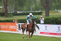 Rabbit well winning steeplechase in Lysa nad Labem Royalty Free Stock Images