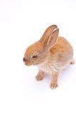 Rabbit on white. Rad fluffy sweet rabbit on white background Royalty Free Stock Photos