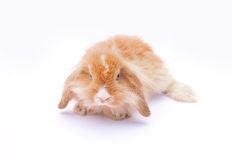 Rabbit on white Stock Photo