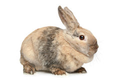 Rabbit on a white background Royalty Free Stock Photography
