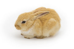 Rabbit on a white background Royalty Free Stock Photo