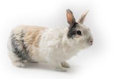 Rabbit on white background Stock Image