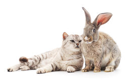 Сat and  rabbit. Сat and  and rabbit on a white background Royalty Free Stock Photos