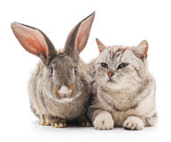 Сat and  rabbit. Stock Photo