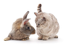 Сat and  rabbit. Royalty Free Stock Image