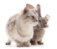 Сat and  rabbit. Сat and rabbit on a white background Stock Photo