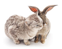 Сat and  rabbit. Royalty Free Stock Photos