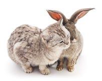 Сat and  rabbit. Сat and rabbit on a white background Royalty Free Stock Photos