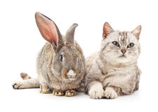 Сat and  rabbit. Сat and rabbit on a white background Stock Image