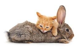 Сat and  rabbit. Сat and rabbit on a white background Royalty Free Stock Photo