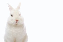 Rabbit on white background Stock Photo